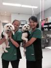 Northcote Animal Hospital (nOah)